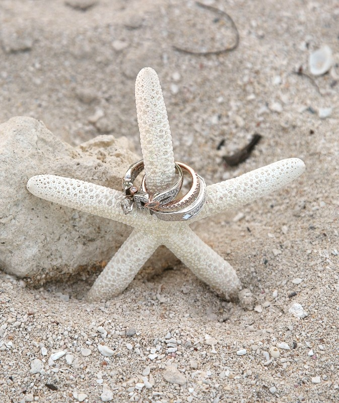 Shell And Starfish Decor For Your Jersey Shore Beach Wedding