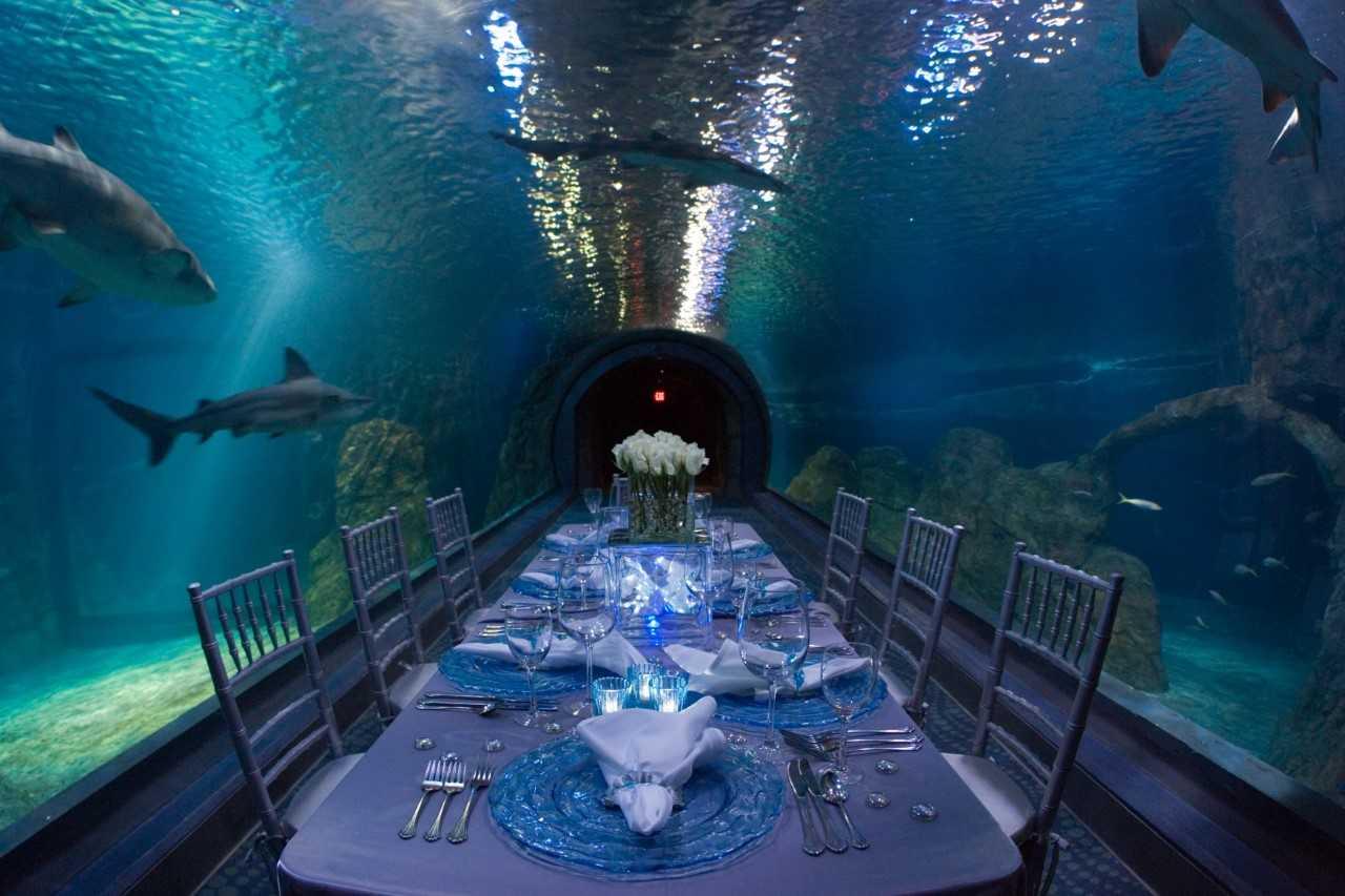 Adventure Aquarium Wedding Venue in Philadelphia  PartySpace