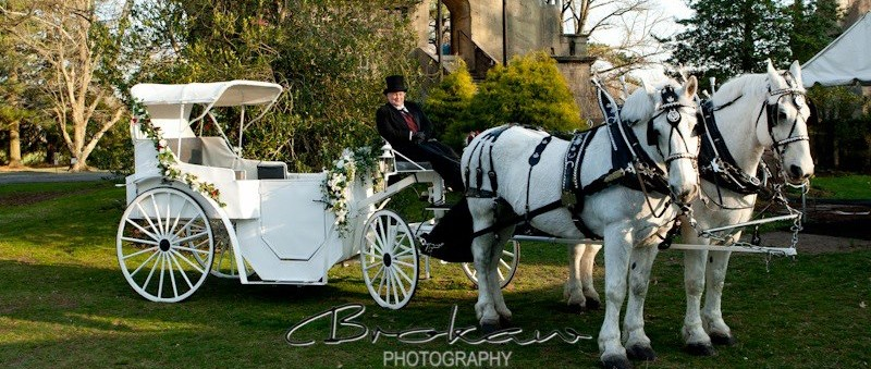 Bee Tree Trail Cinderella Carriage Rides Main Image