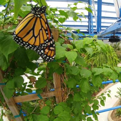 Philadelphia Butterfly Pavilion Preview