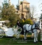 Bee Tree Trail Cinderella Carriage Rides Preview