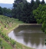 Blue Mountain Vineyard Preview