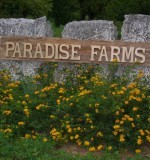 Paradise Farms Preview